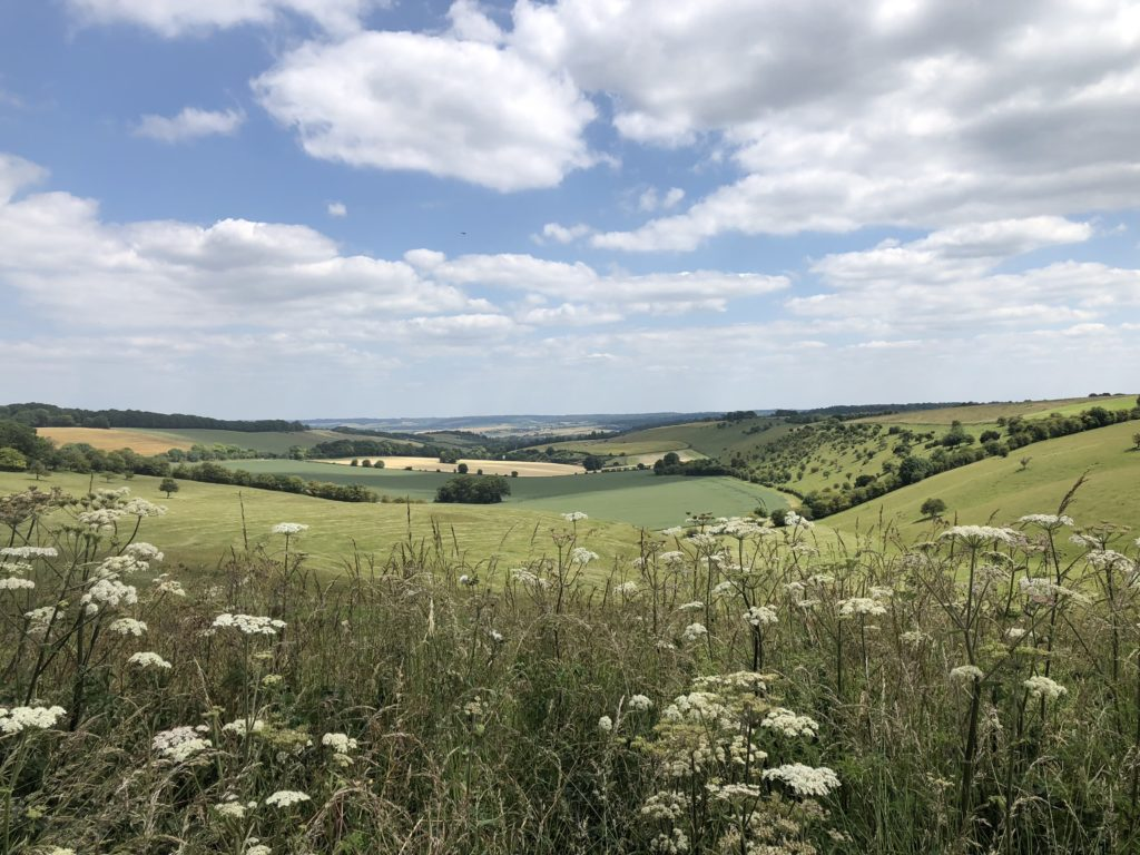 Local view on The Downs