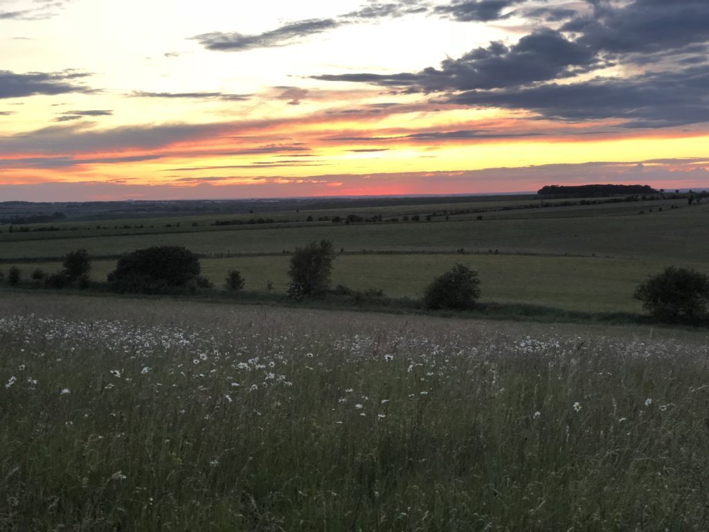 Sunset and wild flowers on The Downs nearby